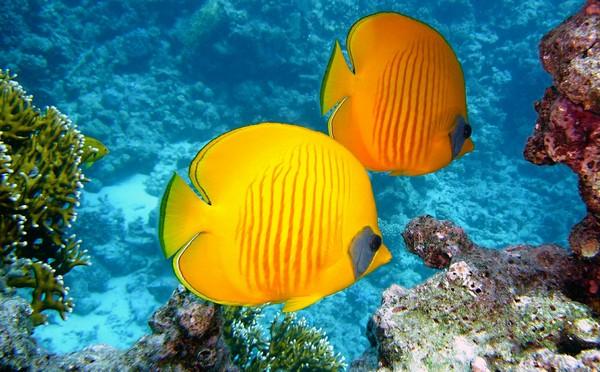 рыбы гороскоп на июнь